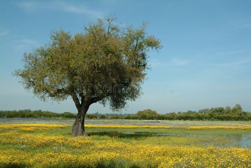 Árvore no campo flowery, primavera foto de stock royalty free