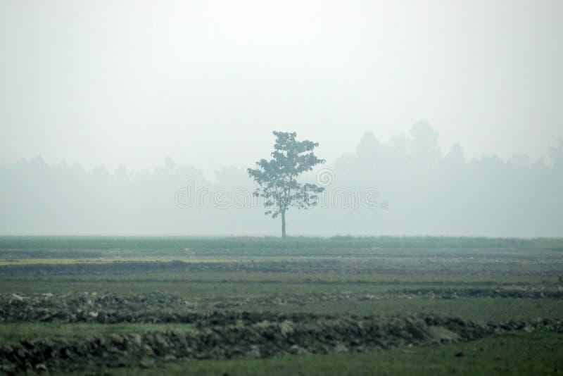 Árvore no campo meados de foto de stock
