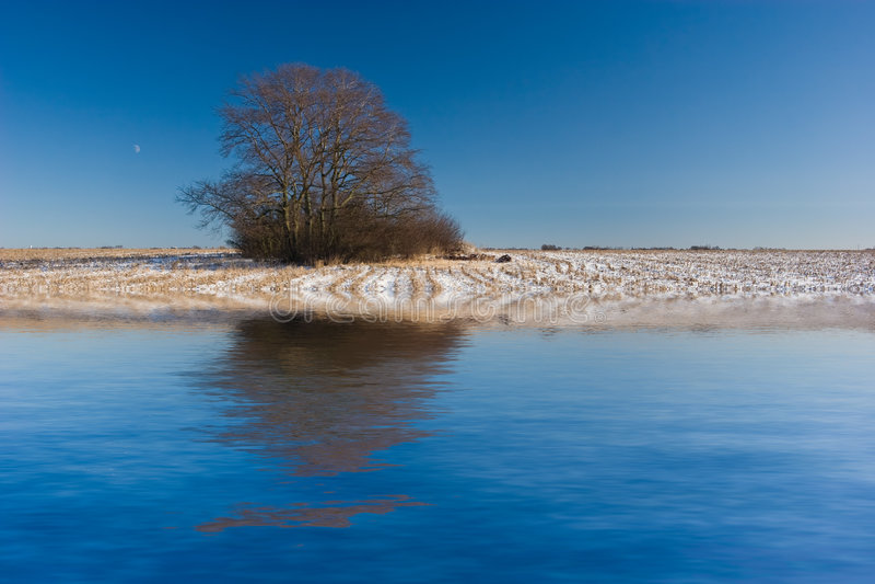 Árvore no campo nevado refletido foto de stock royalty free