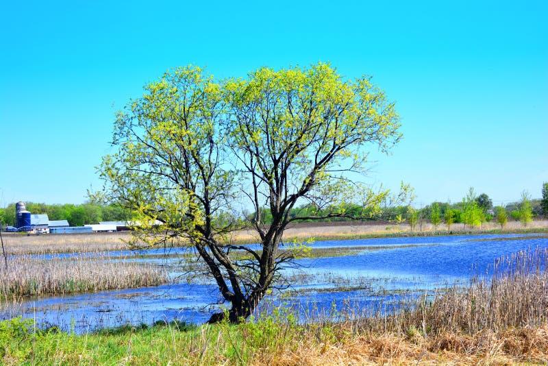 Árvore no celeiro e na lagoa do país no fundo fotos de stock royalty free