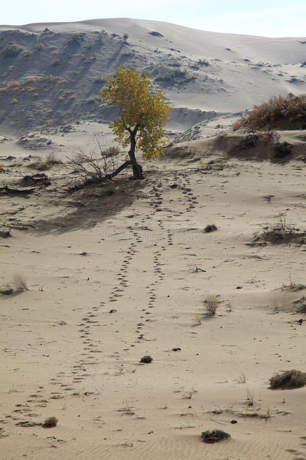 Download Árvore no deserto foto de stock. Imagem de vida, sendo - 16862512