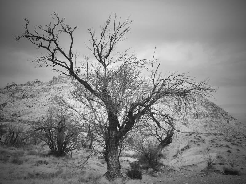 Árvore no deserto alto imagens de stock royalty free