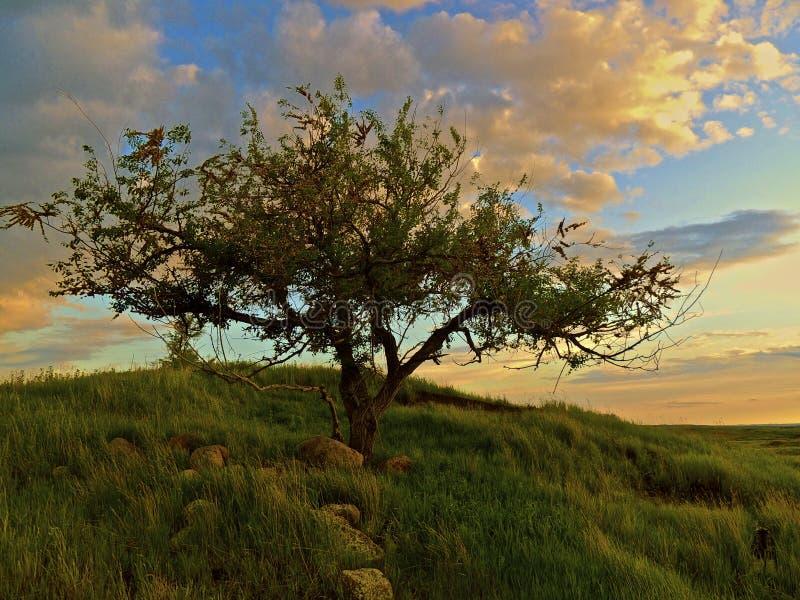 Árvore no fFeather do monte no campo foto de stock