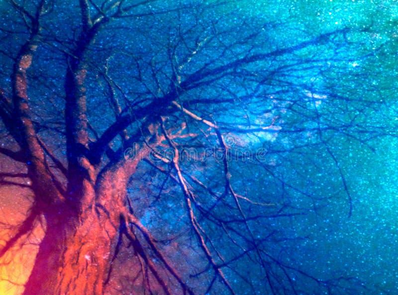 Árvore no fogo com céu noturno estrelado fotografia de stock royalty free