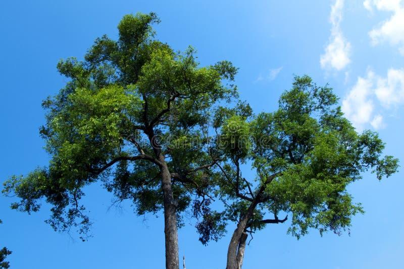 Árvore no fundo do céu fotos de stock
