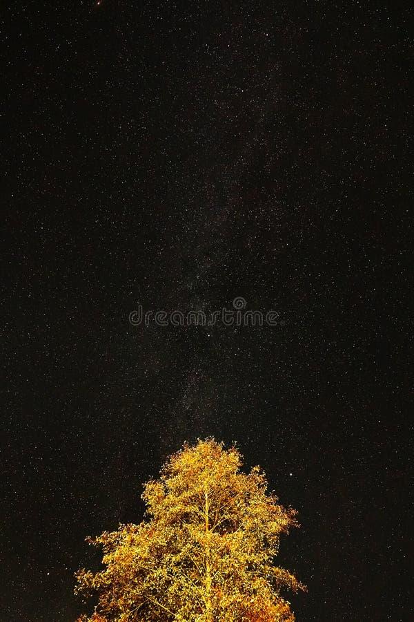 Árvore no fundo do céu noturno com as estrelas, a Via Látea fotos de stock