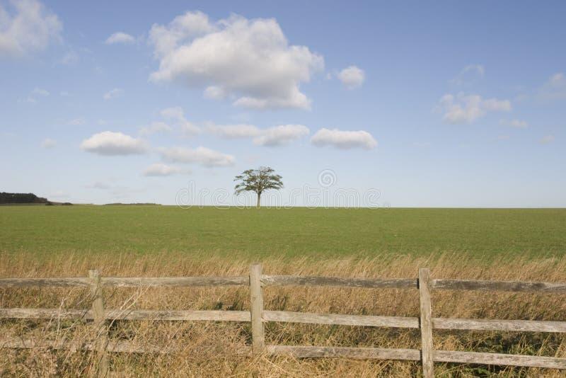 Árvore no horizonte fotografia de stock royalty free