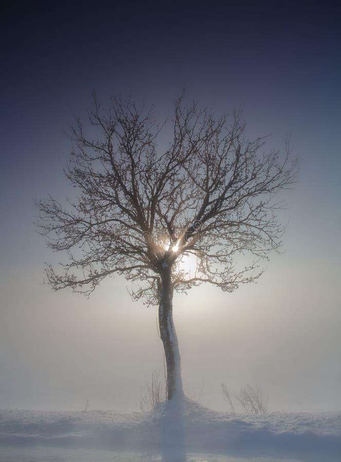 Árvore no inverno fotografia de stock royalty free