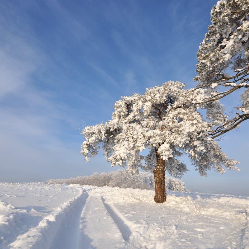 A árvore no inverno com neve cobriu campos foto de stock