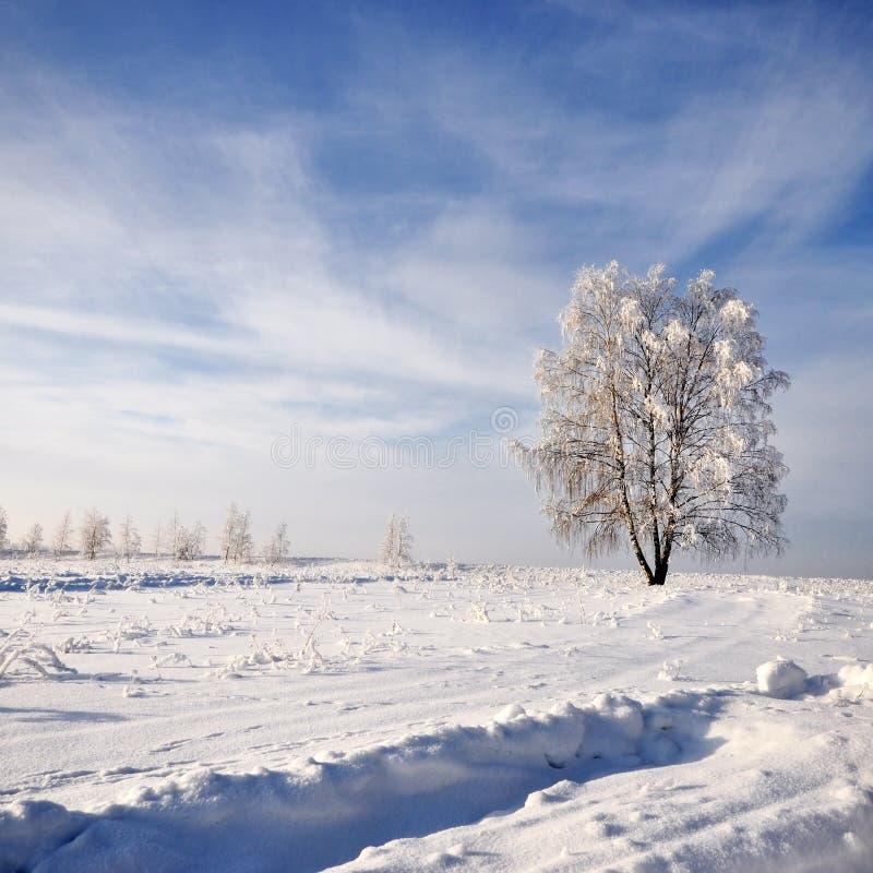 A árvore no inverno com neve cobriu campos foto de stock royalty free