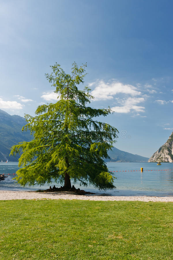 Árvore No Lago Imagens de Stock