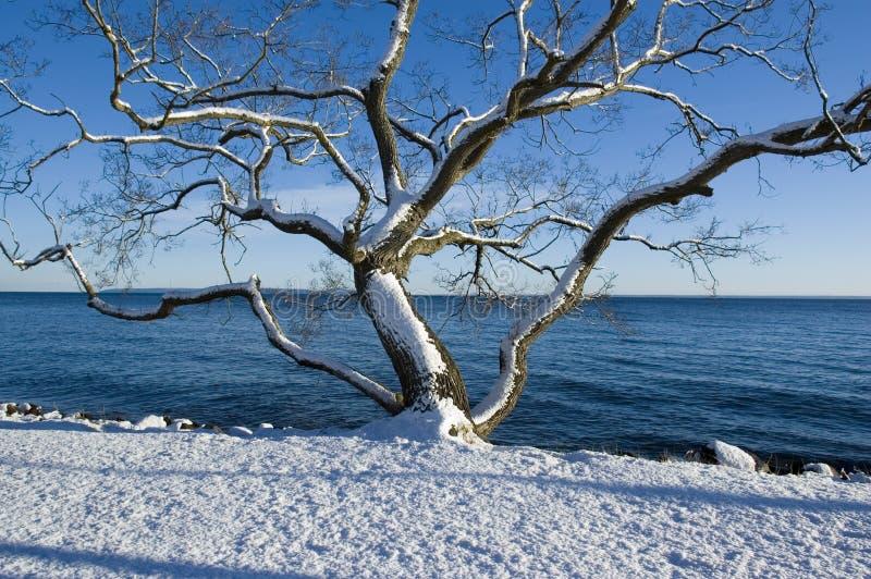 Árvore no lago imagem de stock