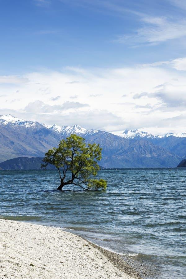 Árvore no lago Wanaka fotos de stock