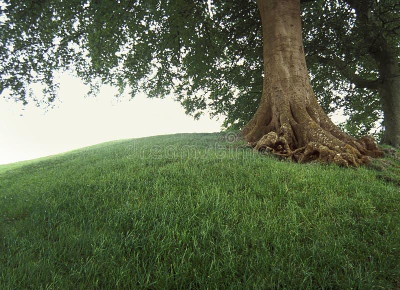 Árvore no monte gramíneo. imagem de stock