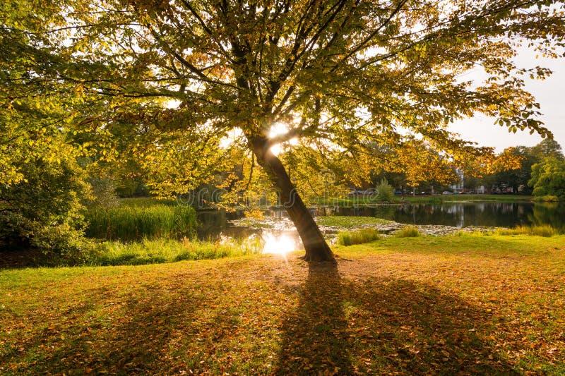 Árvore no nascer do sol em uma manhã no outono imagens de stock royalty free