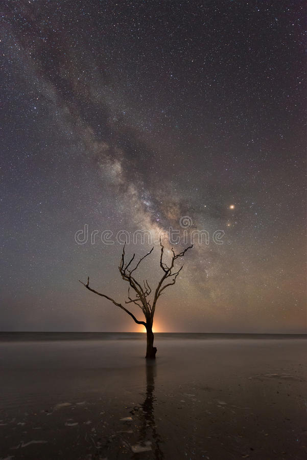 Árvore no oceano sob a galáxia da Via Látea fotos de stock