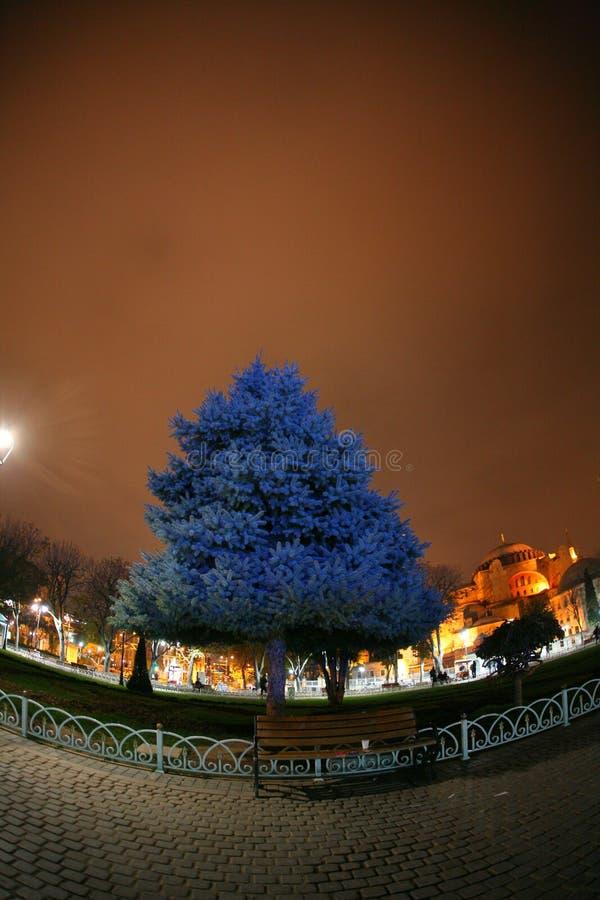 Árvore no parque de Istambul fotos de stock