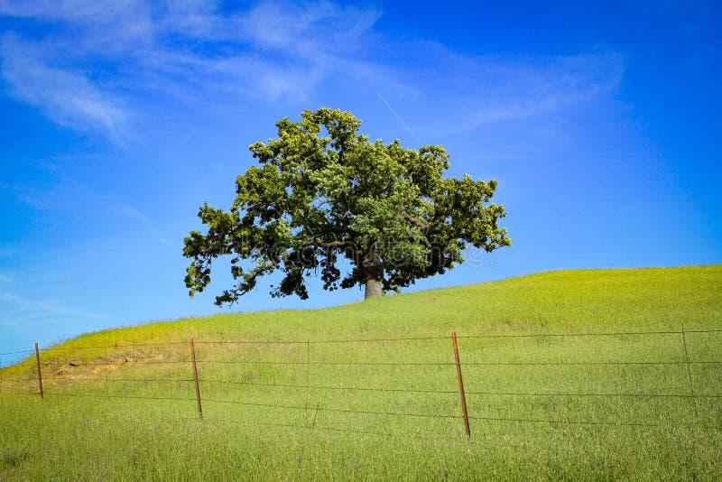 Árvore no pasto fotografia de stock royalty free
