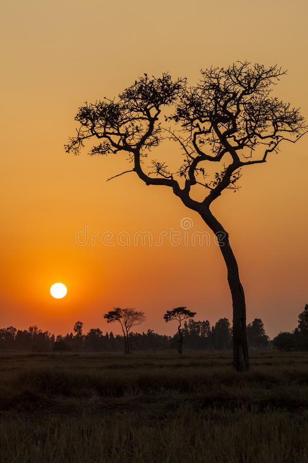 Árvore no por do sol fotos de stock