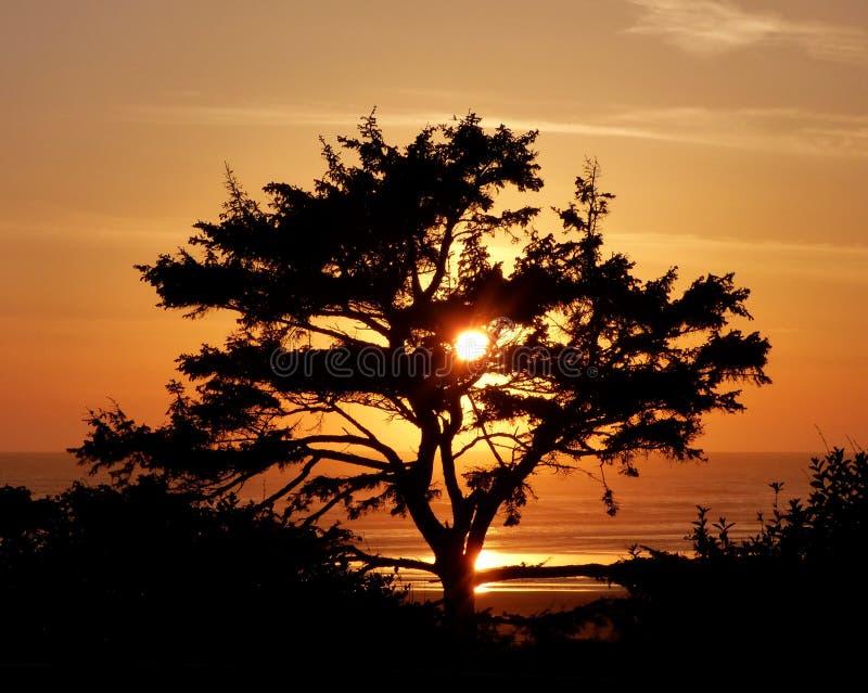 Árvore No Por Do Sol Domínio Público Cc0 Imagem