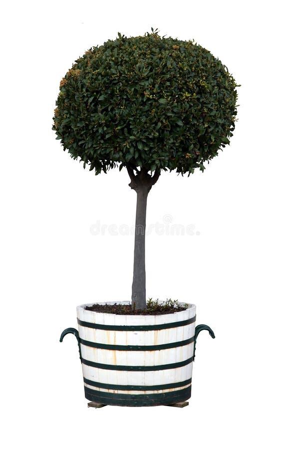 Árvore no potenciômetro imagens de stock royalty free