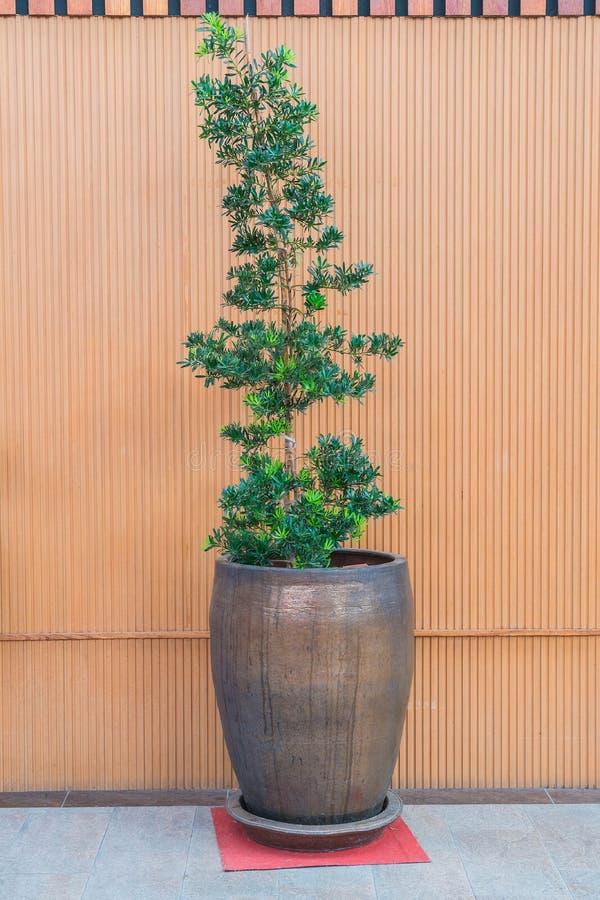 Árvore no potenciômetro foto de stock royalty free