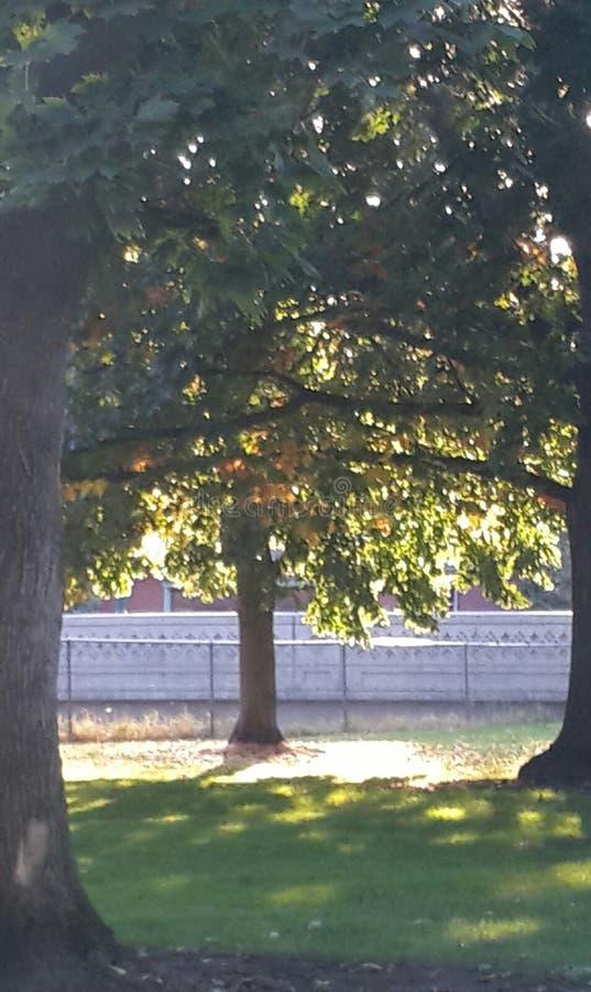 Árvore no sol fotografia de stock