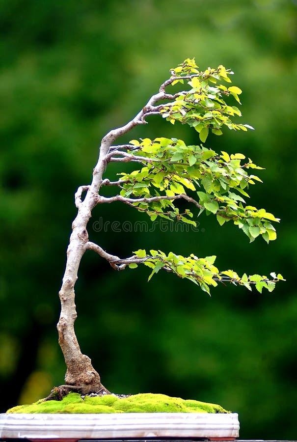 Árvore no vento imagens de stock royalty free