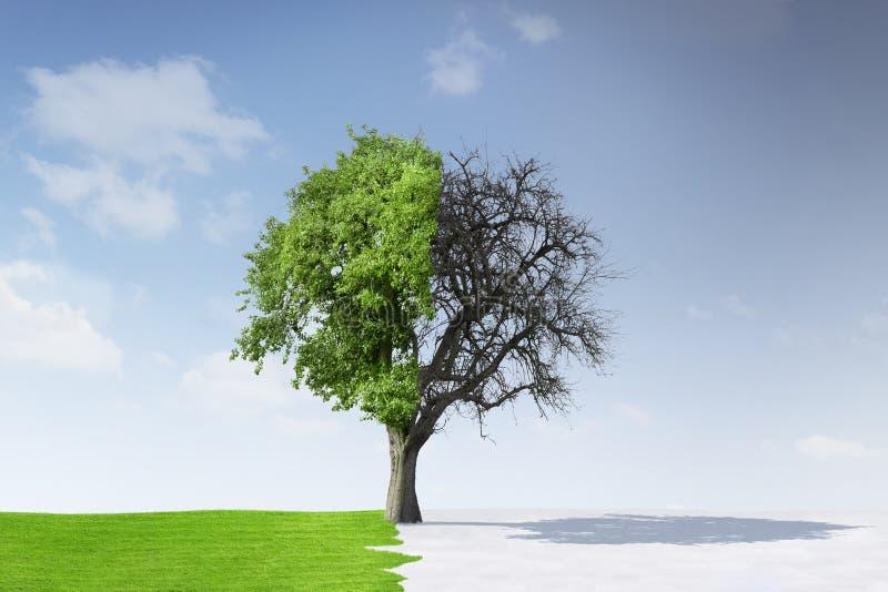 Árvore no verão e no inverno foto de stock royalty free