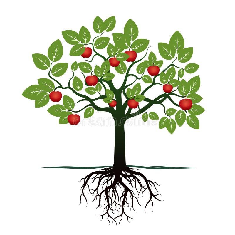 Árvore nova com folhas verdes, raizes e as maçãs vermelhas