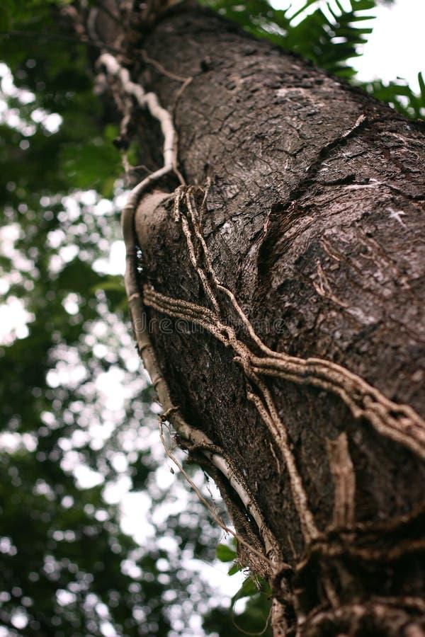 A árvore obscura na floresta fotos de stock