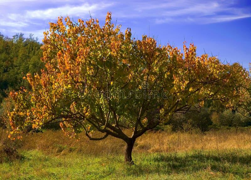 Árvore outonal imagem de stock royalty free