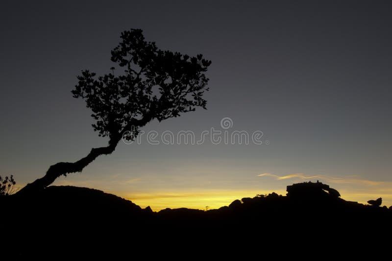 Árvore a parte superior do platô de Roraima fotos de stock