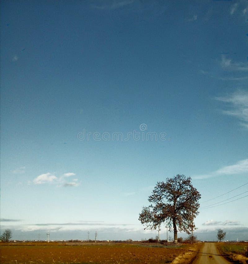 Árvore pela estrada imagem de stock royalty free
