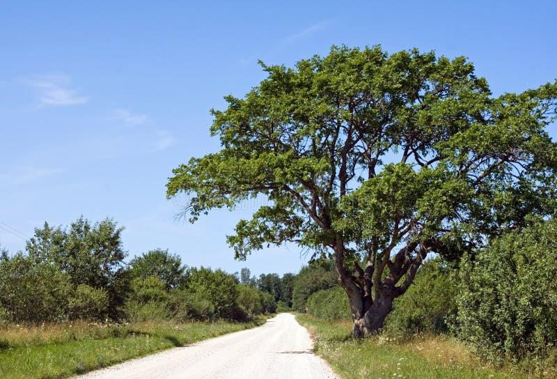 Árvore pela estrada imagens de stock royalty free