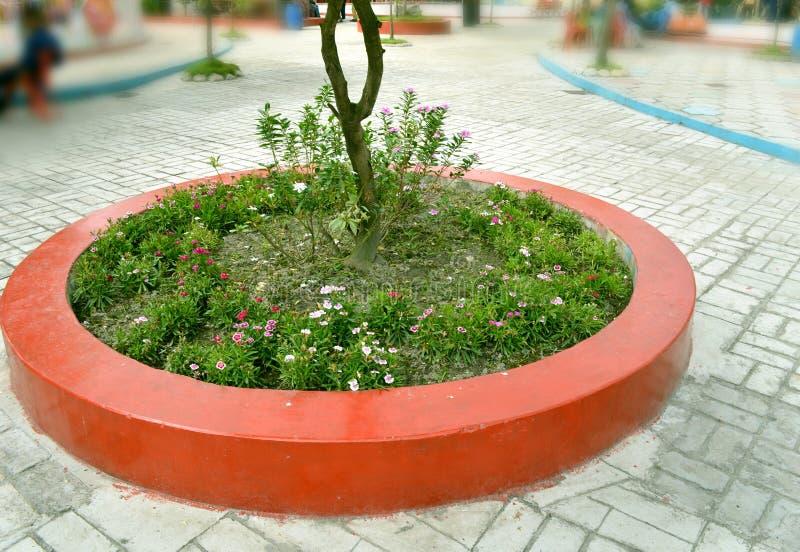 Árvore pequena agradável no lugar público fotografia de stock royalty free