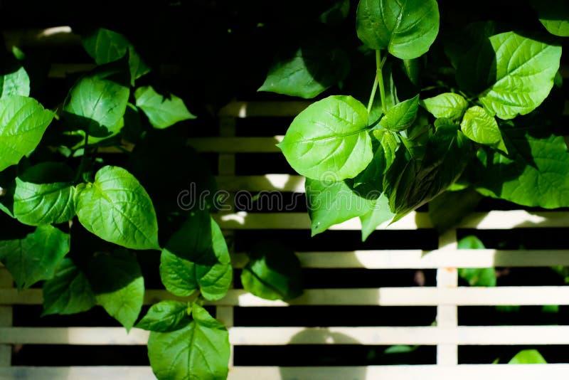 Árvore pequena com banco fotografia de stock royalty free