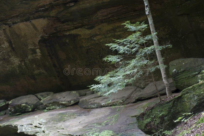 Árvore pequena com cara da rocha fotos de stock