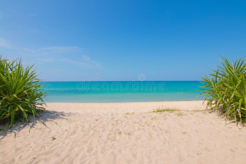 A árvore pequena dos pares é separada para a maneira da caminhada à praia imagem de stock