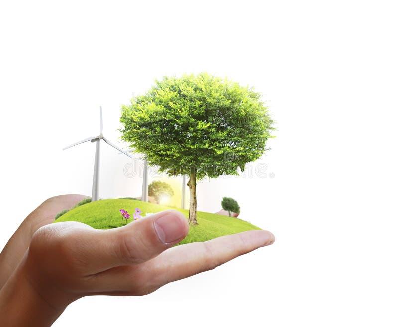 Árvore pequena em uma mão imagens de stock royalty free
