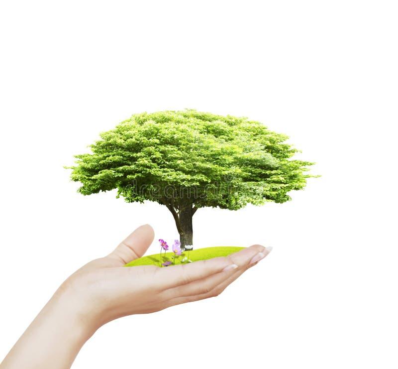 Árvore pequena, planta à disposição imagem de stock