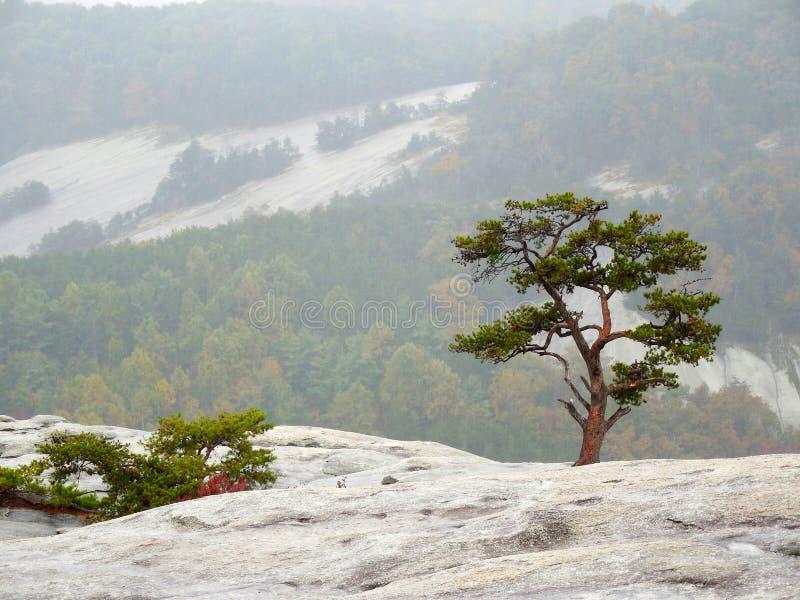 A árvore pequena que cresce na rocha com montanha balança no fundo foto de stock royalty free
