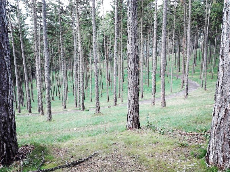 Árvore perfeita fotos de stock royalty free