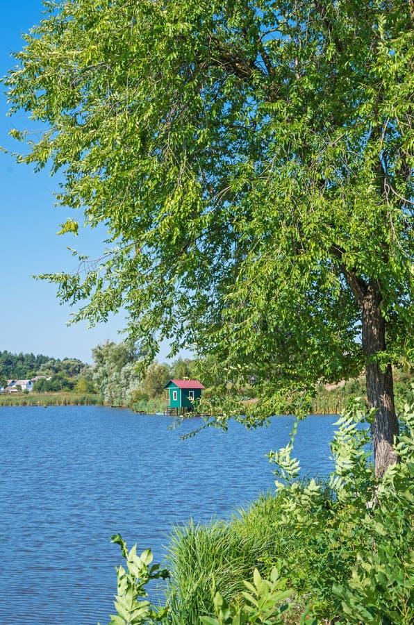 Árvore perto da lagoa foto de stock