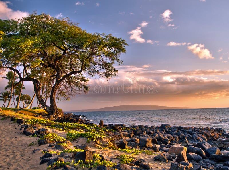 Árvore pitoresca pelo oceano no fulgor do por do sol da tarde fotografia de stock