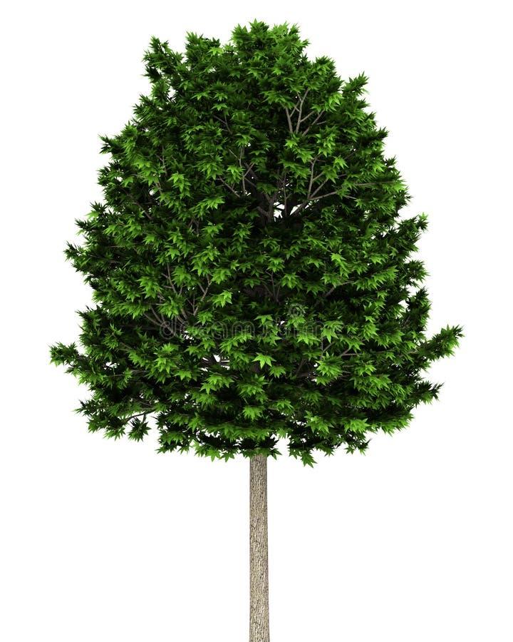 Árvore plana de Londres isolada no branco ilustração royalty free