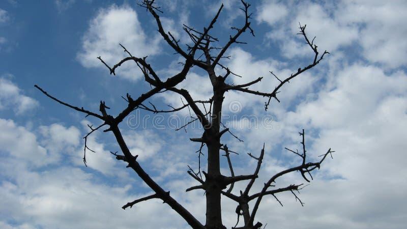Árvore podre fotos de stock royalty free