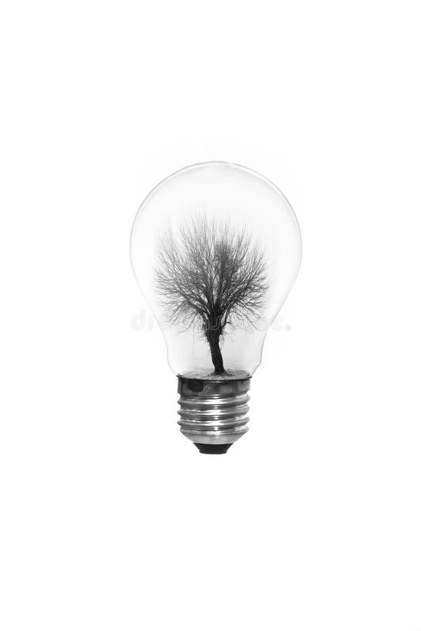 Árvore preta em um bulbo de lâmpada que flutua no ar imagem de stock