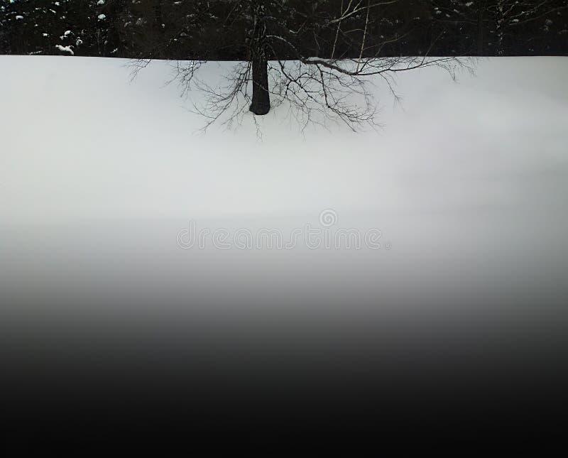Árvore preto e branco no fundo liso da paisagem da neve imagem de stock royalty free