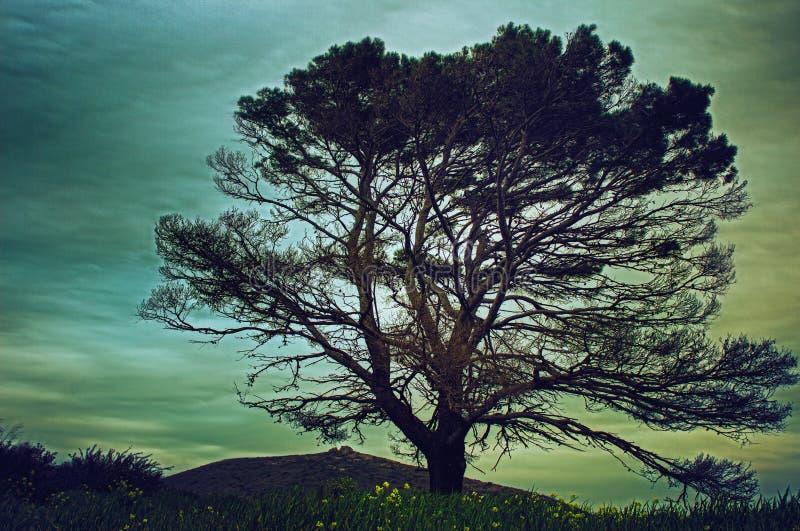 Árvore quase inoperante imagens de stock royalty free